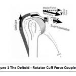 Shoulder Pathology: The Influence of the Athlete's Training Program Design